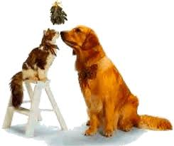 cat and dog mistletoe