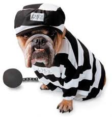 jail bulldog