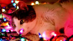 kitten lights