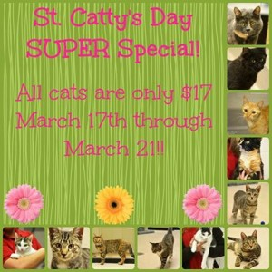 st catty's day special