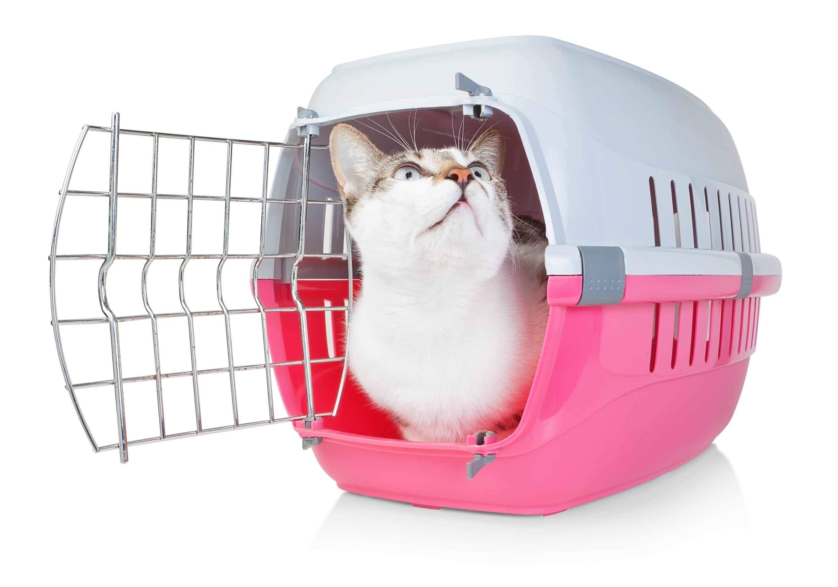 how to get a cat in a pet carrier