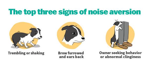 Sileo for Noise Phobia – Covington Veterinary Clinic